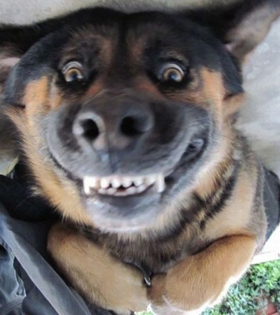 25 Funny Animal Pictures That Will Make You Smile - Page ...